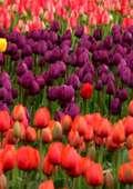 Ce plante să ai în casă? Alege planta cea mai apropiată de suflet, cea cu care rezonezi cel mai bine