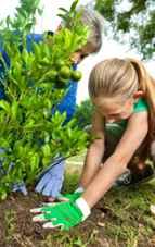 Cum se face plantarea pomilor fructiferi în grădina Feng Shui
