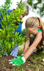 Plantează pomii fructiferi ținând cont de câteva reguli feng shui, simplu de aplicat, pentru sporul casei. Feng Shui este ştiinţa care ne învaţă cum să