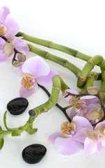 Există numeroase ritualuri pentru atragerea iubirii adevărate în viața noastră! Iată care sunt plantele ce atrag energia pozitivă, conform vechilor tradiții