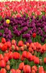 Plante recomandate pentru zodii, alese în funcție de planeta care te guvernează. Zodiacul plantelor. Plantele ne înfrumuseţează casa şi poate biroul, dau o