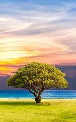 Literatura, religia și arta oferă un loc special copacului vieții, denumit și Arborele Cosmic sau Pomul Vieții, simbolul universal al nemuririi și vindecării spirituale.
