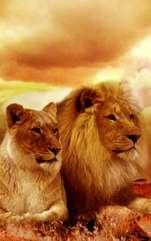 Comportamentul în dragoste al nativului Leu. Trăsături dominante de caracter ale femeii și bărbatului Leu. Firi pasionale, nativii Leu nu pot trăi fără