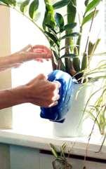 Plante de apartament care atrag energie pozitivă, când este bine să facem plantările, cum folosim trandafirii. Ștința Feng Shui folosește teoria celor 5