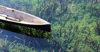 Algele marine - beneficii și proprietăți nebănuite