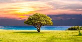 Legendele Copacului vieții – simbolul vindecării sufletești și a vieții veșnice