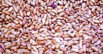 Bogată în fibre și slabă în calorii – Beneficiile multiple ale fasolei pătate