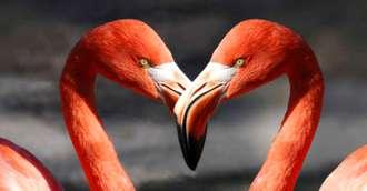Știi să atragi iubirea în viața ta? Sfaturi pentru a amenaja dormitorul pentru un cuplu