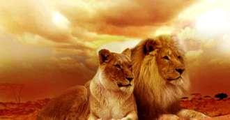 Pasiune și dezinvoltură – Leu, cum se exprimă cel mai bine acești nativi