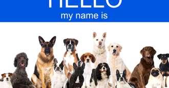Nume de câini și semnificația numelui. Alege un nume prietenul tău patruped