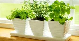 5 Plante aromatice care aduc beneficii în bucătărie