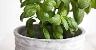 Superstiții și sfaturi din bătrâni – 4 plante magice pentru sănătate