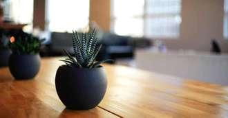 Planta banilor pentru locul de muncă și plante aducătoare de noroc la bani