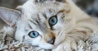 6 Beneficii incredibile pentru sănătate oferite de pisici ::: ZODIACOOL