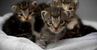 Superstiții și obiceiuri străvechi – 10 lucruri pe care mulți nu le știu despre pisici