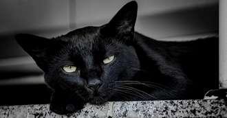 Superstiții și obiceiuri străvechi: Trebuie sau nu să te ferești de pisica neagră?